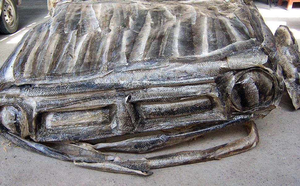 Shredded-skin-fish-car-detail-front-body